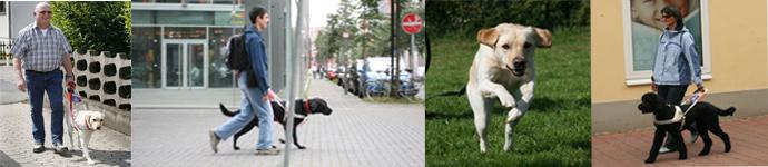 blindenfuehrhunde
